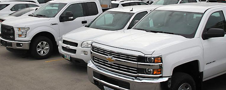 Image of clean and white VEMA-managed half-ton trucks and sedans as part of its Light Duty Vehicles available for short term rental vehicles in Manitoba