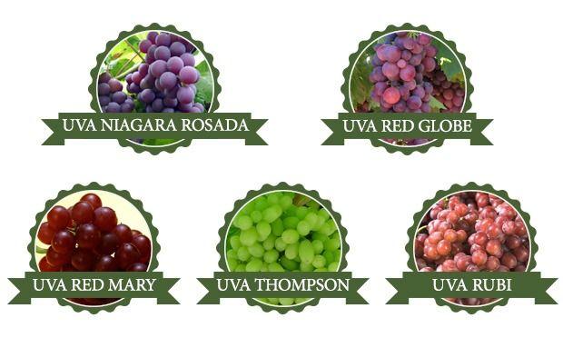 Qual a Diferença Entre o Vinho Colonial e o Vinho Fino?