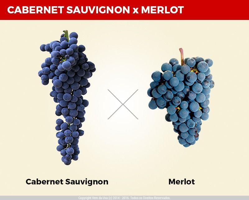 Qual a Diferença Entre o Vinho Cabernet Sauvignon e o Merlot?