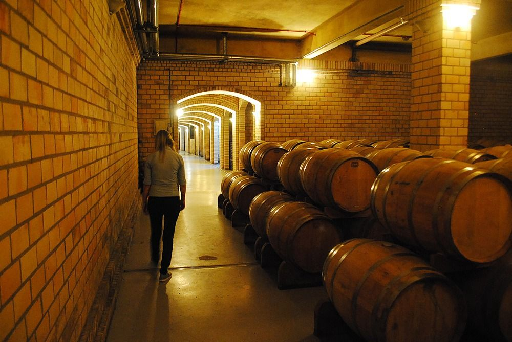 É aqui que os vinhos de maior valor maturam em barris de carvalho francês e americano