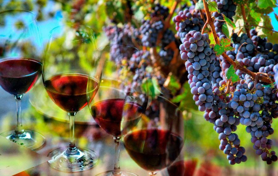 Curiosidades Pinot Noir