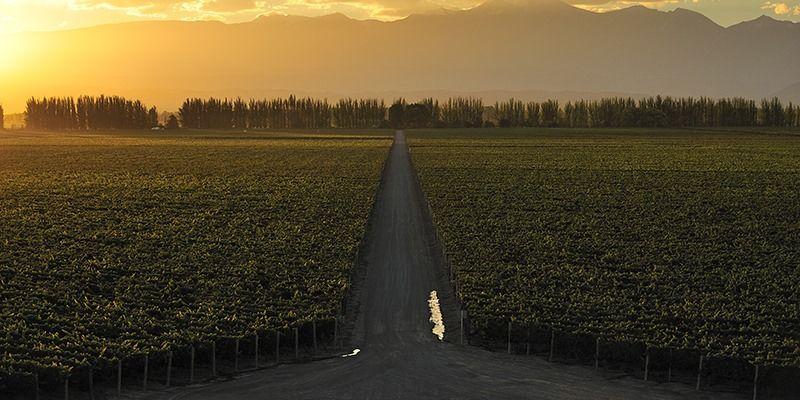 <strong>Feira Internacional do Vinho:</strong> 250 marcas nacionais e internacionais