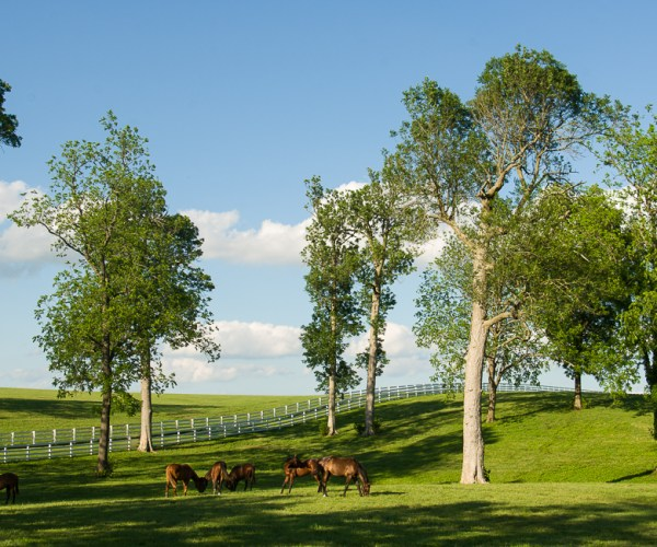 The horse farms that make the Bluegrass famous are found in the Inner Bluegrass