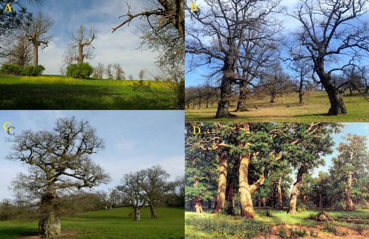 Woodland Pastures