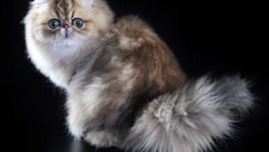 gatti più belli del mondo