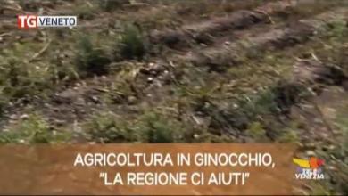 TG Veneto: le notizie del 4 marzo 2019