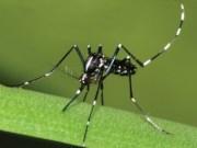 Lotta contro le zanzare: il comune di Mirano inizia i trattamenti - Televenezia