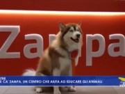 Centro veterinario: apre Ca' Zampa che aiuta ed educare gli animali