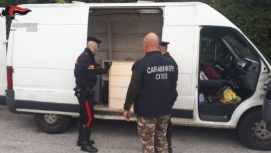 Photo of Colombi domestici: maxi sequestro in un furgone