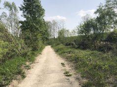 Taglio della vegetazione lungo la golena a San Donà
