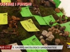 Riconoscere i funghi con il Gruppo Micologico Sandonatese