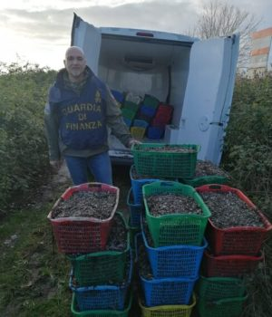 Vongole veraci: maxi sequestro di semina a Chioggia