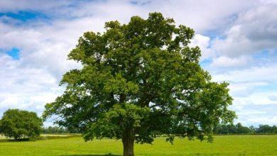 Un Albero in più: a Dolo 40 nuovi alberi - Televenezia