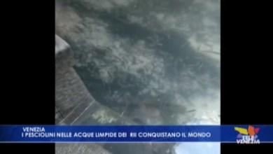 VIDEO: Acqua limpida nei rii di Venezia: si scorgono pesci e fondale - Televenezia