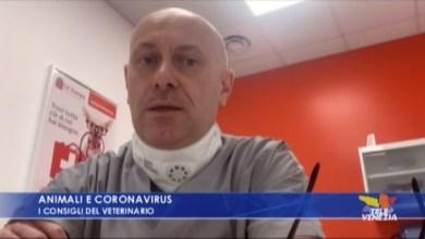 Coronavirus: le raccomandazioni igieniche per cani e gatti