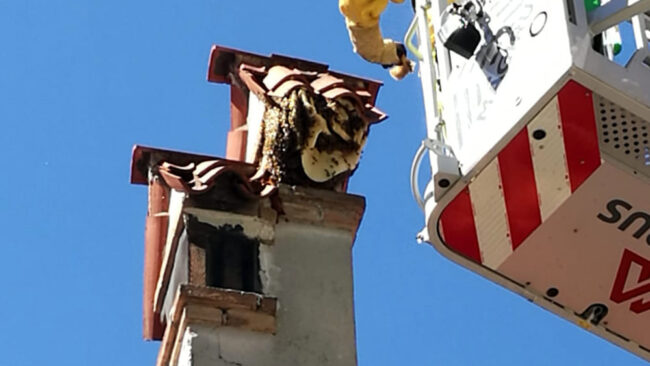 Mega alveare sul camino a Mestre: intervenuti i vigili del fuoco