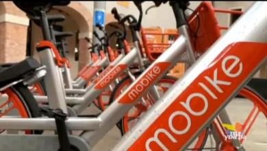 Nuovo servizio di bike sharing a Mestre e al Lido: si noleggiano con l'App
