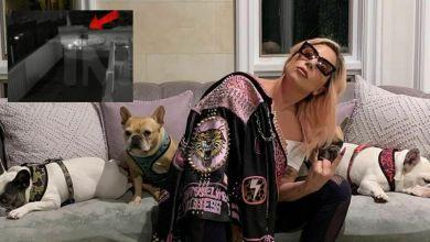 Lady Gaga: rapiti i suoi cani, il dog sitter in fin di vita