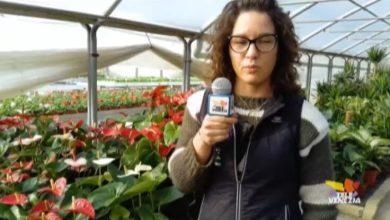 VIDEO: Piante e fiori della stagione per il nostro benessere - Televenezia