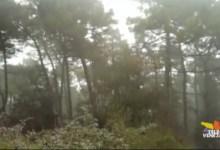 Porto Caleri: un giardino maestro di vita sul delta del Po
