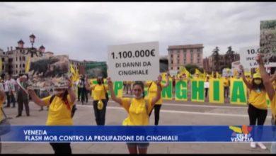 Campi veneti devastati dai cinghiali: il flash mob di Coldiretti