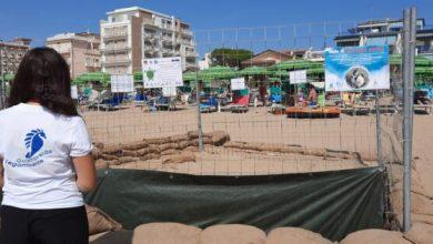 Goletta Verde a Jesolo per celebrare la nascita di 80 piccole tartarughe - Televenezia
