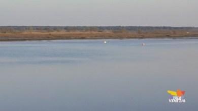 Tartaruga Caretta Caretta è diventata mamma nel Delta del Po