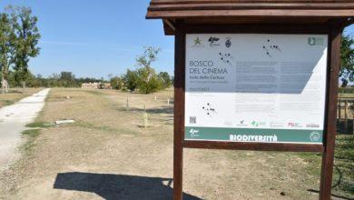 Isola della Certosa: 100 nuovi alberi dedicati ai Leoni d'oro del cinema