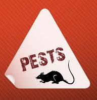 icon for pests