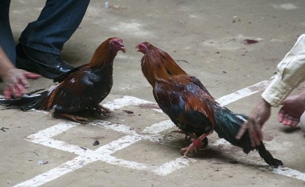 Niega gobierno municipal participación del DIF en evento de gallos a celebrarse en palenque la leyenda: Tuxpan