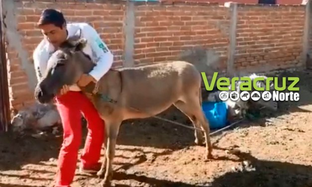 Candidato a diputado del PRI baila y besa a burro (VIDEO)