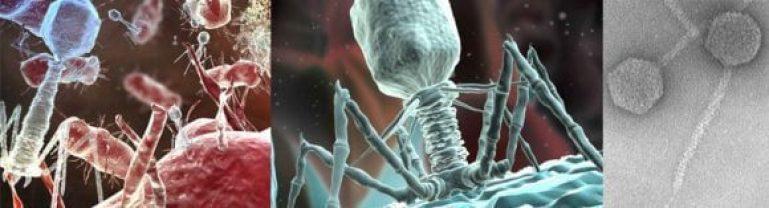 Bacteriofago-lambda
