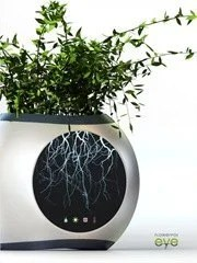 flowerpot-eye-allows-to-see-the-root-system-of-a-plant2