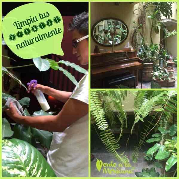 como limpiar las plantas de manera natural