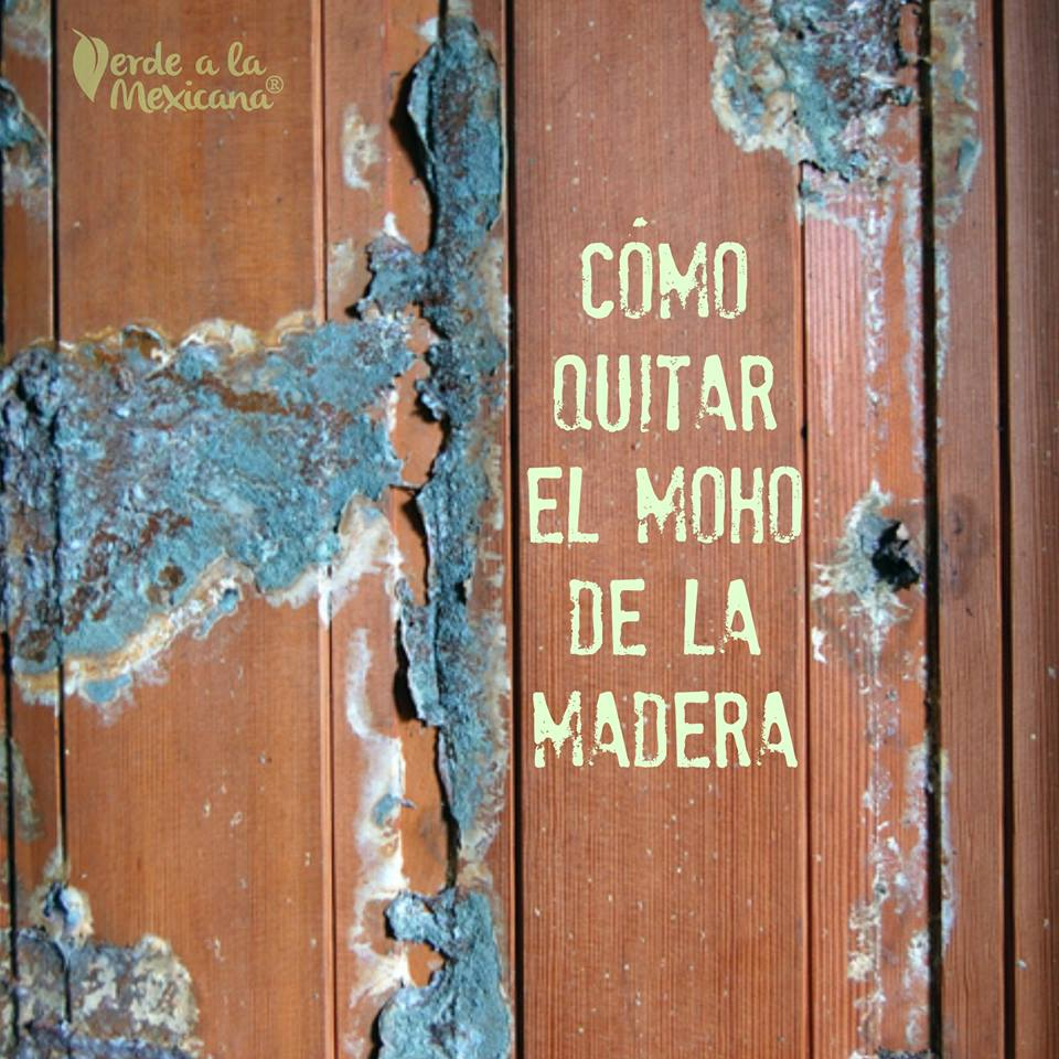 C mo quitar el moho de la madera verde a la mexicana - Como quitar la humedad de una pared ...