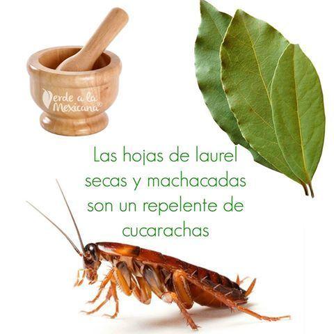 Repelente natural de cucarachas