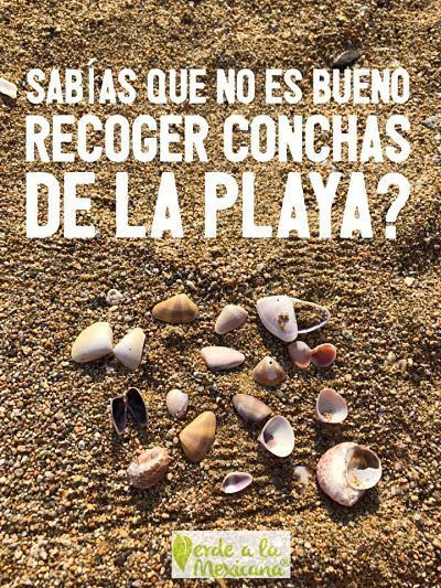 No recojas conchas de la playa