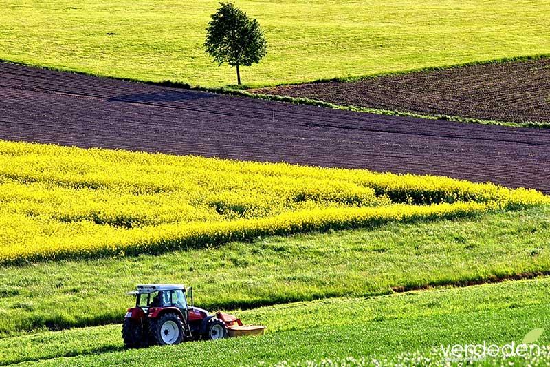 tractor en cultivos-colza