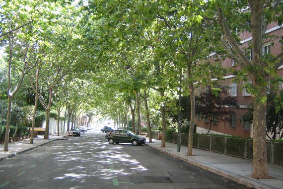 Árboles de los alcorques de Madrid