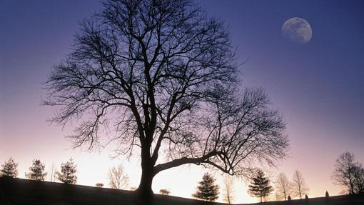 Tree Identification: Puesta de sol y árbol