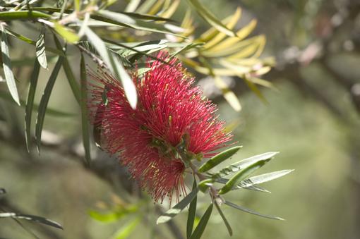 Limpiatubos en El jardín botánico de Emasesa