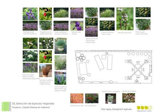 terraza 3. plano de planta con plantas_ Espacios Vivos
