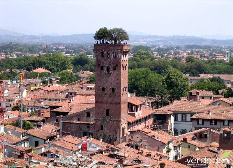 Torre Guinigi -Lucca Italia