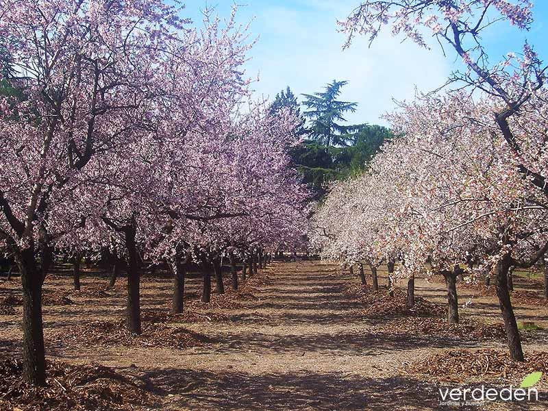 Jardines: Quinta los Molinos