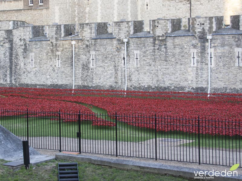 amapolas, tower of London, blood swept lands and seas of red