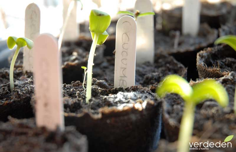 semillero agricultura ecológica