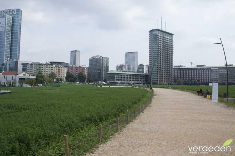Cultivando en el centro de la ciudad: Porta Nuova con Alfalfa