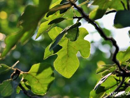ArbolApp. Aplicación para identificar árboles autóctonos