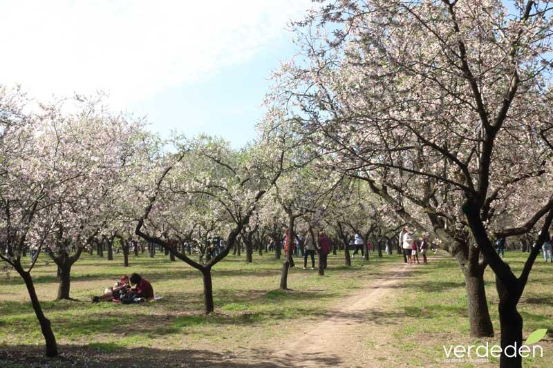 Quinta los molinos_almendros en flor. campo