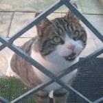 Katzen-Asyl?!